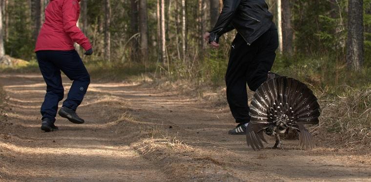 Teema: Luontoretki kuva: Hullu-Ukko, Arto Lintilä, Vesanto