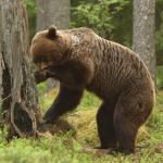 Karhu - Jouko Pirppu